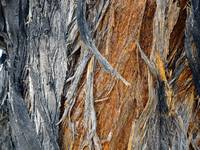 Bark of Palm