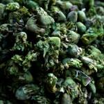 """green"" by daniella"