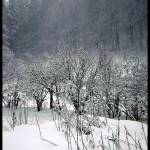 """Snowstorm"" by ArtisticRabbit"