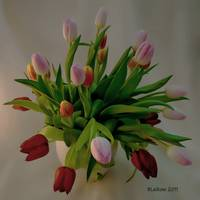 Tulip in Bouquet Formation
