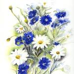 """Blue and White Daisies"" by artypam"