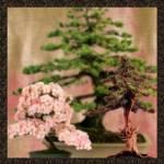"""""""Bonsai Garden"""" by MoonDreams"""