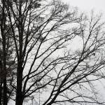 """""""tree34"""" by ArtZThings"""