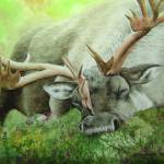 """Sleeping Caribou"" by saraalexandermunoz"