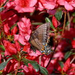 """Butterfly on a plant"" by Roberth"