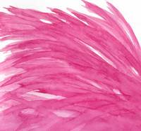 Wisps of Wings