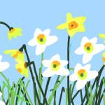 """""""Daffodils"""" by nsilcock"""