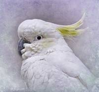 Soft Yellow Feathers