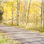 """Pathway Through Autumn Aspen"" by JBentley"