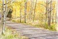 Pathway Through Autumn Aspen
