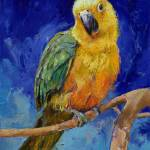 """Jenday Conure"" by creese"