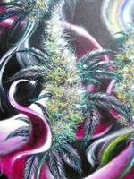 marijuana artwork