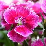 """Flowers of Spring"" by pravine"
