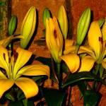"""""""Lilies in Vase 1"""" by georgerhunt"""