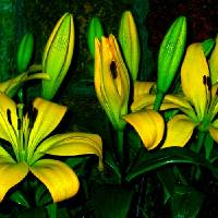 Lilies in Vase 2 Art Prints & Posters by George Hunt