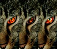 Cat's Eye I, II, III