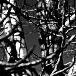 """Poplars 0659-5"" by BarbaraLin"