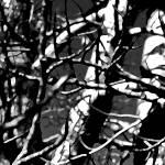 """Polars 0659-6"" by BarbaraLin"