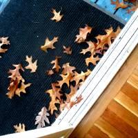 Fall Leaves Art Prints & Posters by Lynn Carter