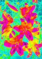 Photo Bella Lilies Rainbow Digital