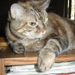"""Cat on Bookshelf"" by DonnaGrayson"