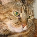"""Pretty Cat"" by DonnaGrayson"