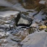 """Portrait of a Pebble in a Stream"" by photo_witt"