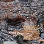 """Autumn Stream"" by photo_witt"