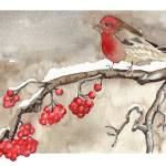 """Snow Bird"" by lindalou2"