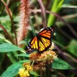 """""""butterfly(2)"""" by kjb"""