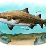 """Gray Nurse Shark"" by inkart"