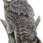 """Great Gray Owl"" by inkart"