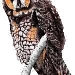 """""""Long-Eared Owl"""" by inkart"""