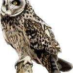 """""""Short-Eared Owl"""" by inkart"""