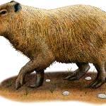 """""""Capybara"""" by inkart"""