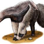 """Giant Anteater"" by inkart"