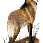 """Maned Wolf"" by inkart"