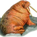 """""""Pacific Walrus"""" by inkart"""