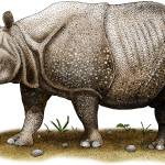 """""""Javan or Sunda Rhinoceros"""" by inkart"""