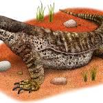 """Argus Monitor Lizard"" by inkart"