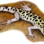 """""""Granite Night Lizard"""" by inkart"""