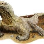 """""""Komodo Dragon"""" by inkart"""