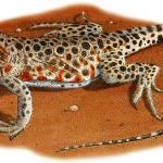 """""""Long-Nosed Leopard Lizard"""" by inkart"""