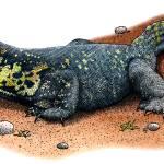"""""""Nile Monitor Lizard"""" by inkart"""