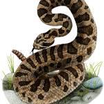 """Eastern Massasauga Rattlesnake"" by inkart"