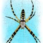 """Black & Yellow Garden Spider"" by inkart"