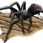 """""""California Tarantula"""" by inkart"""