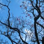 """blossom, botanical gardens, wellington, nz"" by jelly"