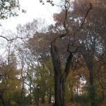 """""""tree, central park, ny"""" by jelly"""