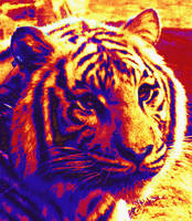 pop art tiger